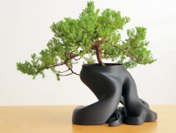 gcreate_bonsai_fullsize_preview_featured.jpg